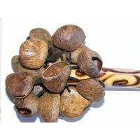 Natural Bali Nut Shaker / Chestnut Shaker / Pangi Seed Shaker - Beautiful Sound
